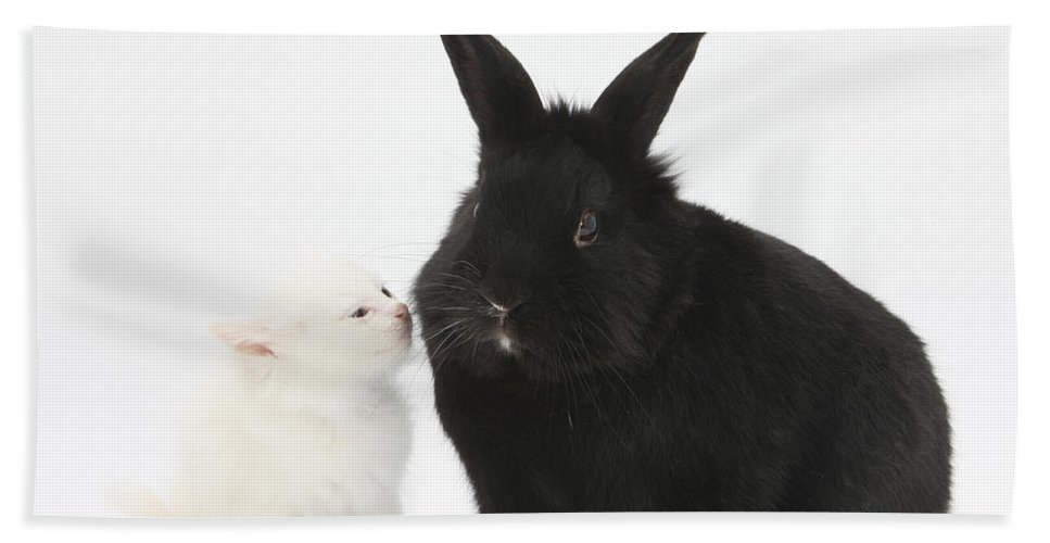 Nature Hand Towel featuring the photograph White Kitten And Black Rabbit by Mark Taylor
