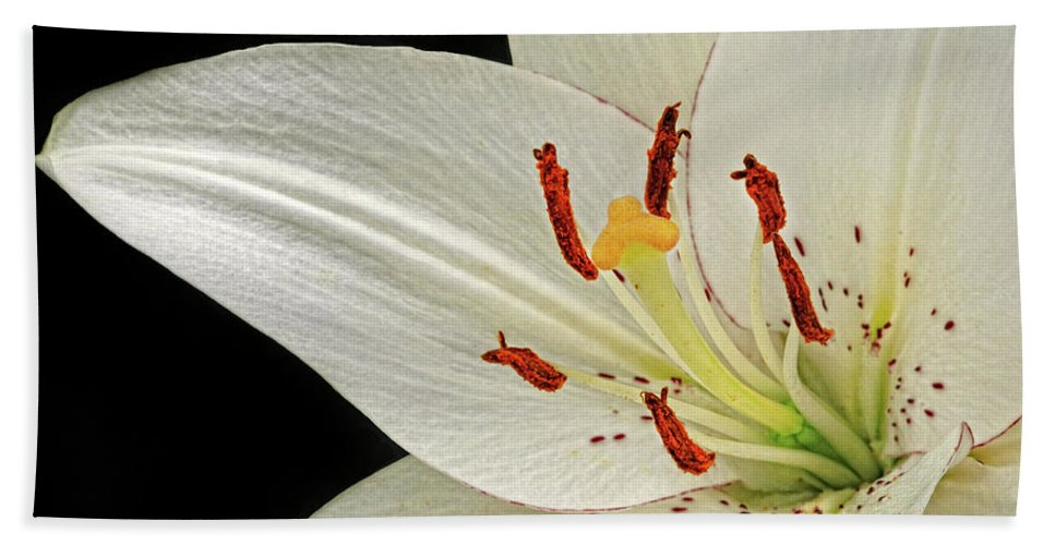 Lily Hand Towel featuring the photograph White Lily by Dave Mills