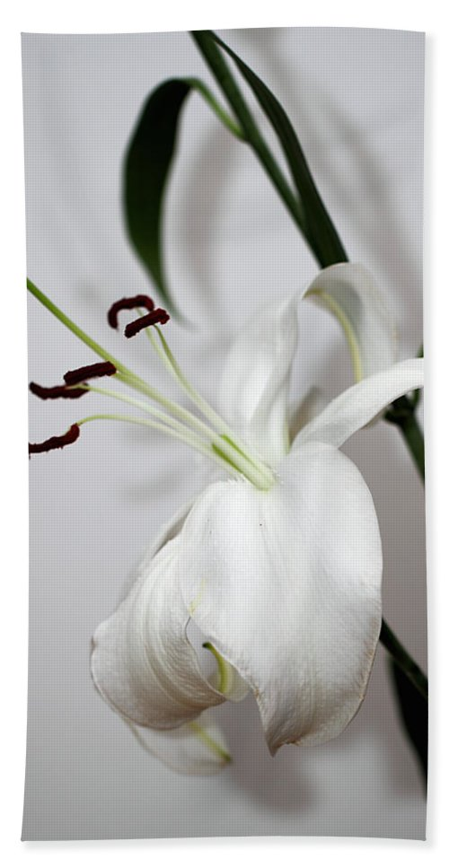 Lily Hand Towel featuring the photograph White Lily Portrait by Carole-Anne Fooks
