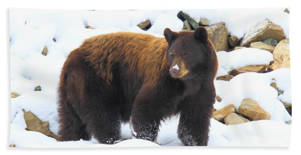 Black Bear Hand Towel featuring the photograph White Nose by Adam Jewell