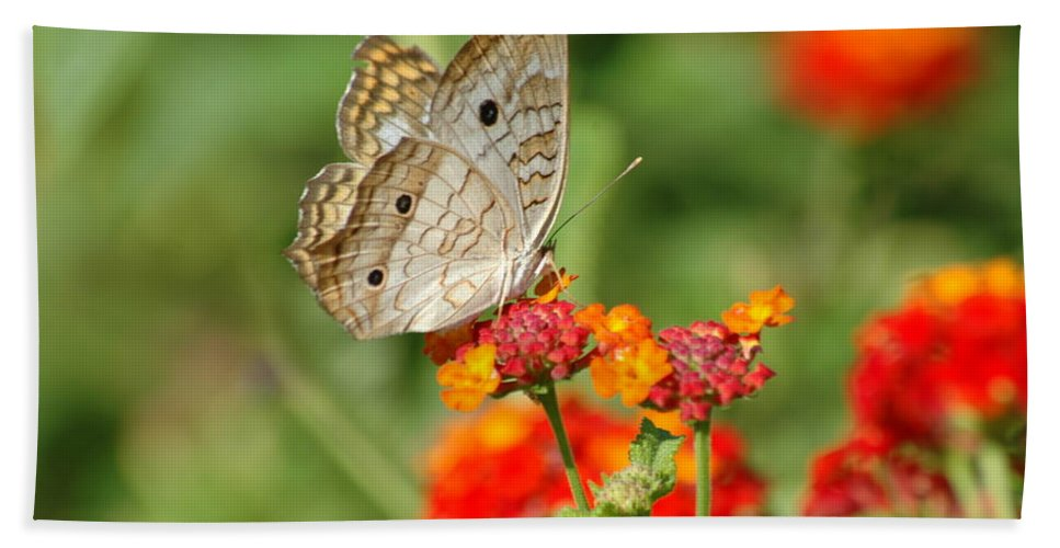 Butterfly Hand Towel featuring the photograph White Peacock Butterfly by Carolyn Marshall