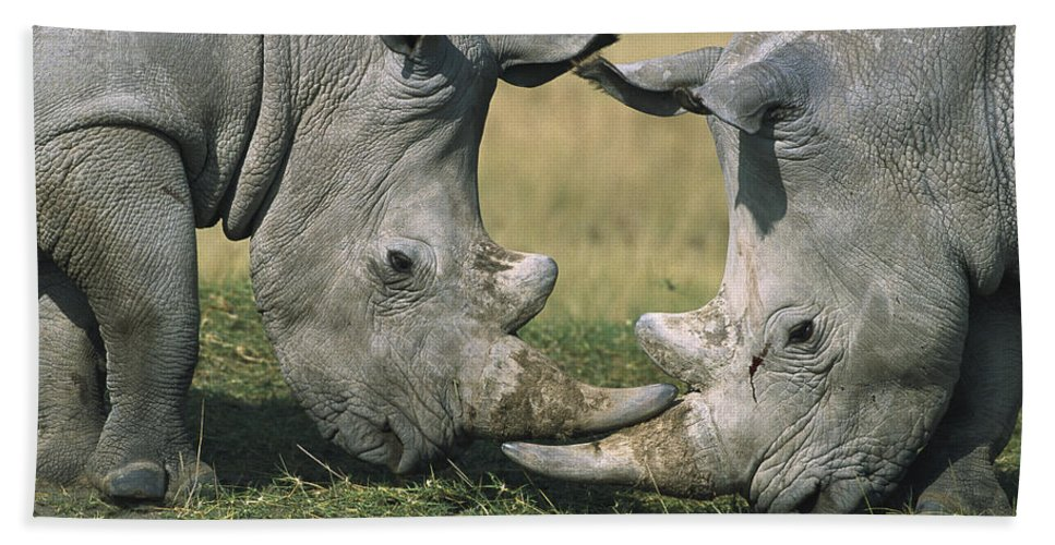 Flpa Hand Towel featuring the photograph White Rhinoceros Ceratotherium Simum by Martin Withers