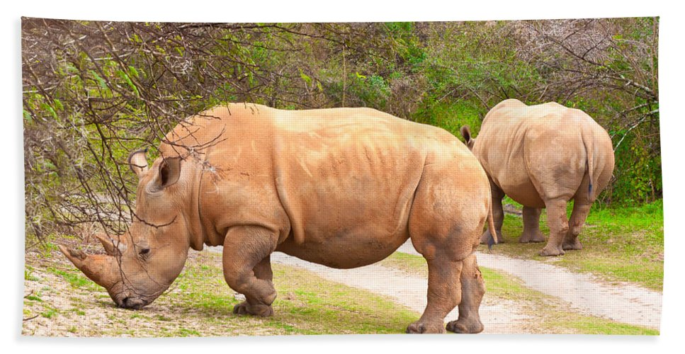 Africa Hand Towel featuring the photograph White Rhinoceros by Tom Gowanlock