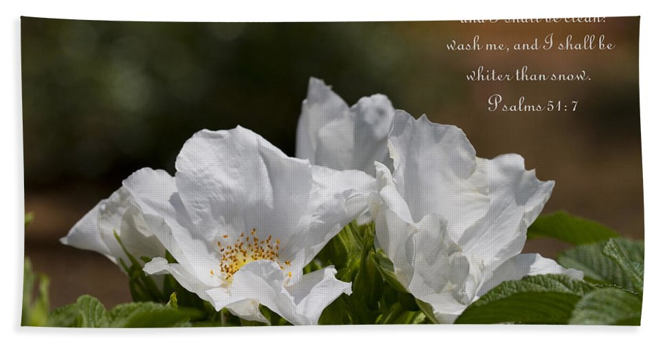 White Roses Bath Sheet featuring the photograph White Roses - Purge Me With Hyssop by Kathy Clark