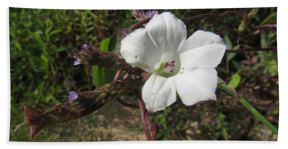 Plant Bath Sheet featuring the photograph Small White Morning Glory by Donna Brown