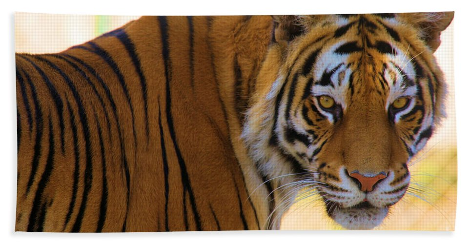 Bengal Tiger Bath Sheet featuring the photograph Whos Bad by Adam Jewell