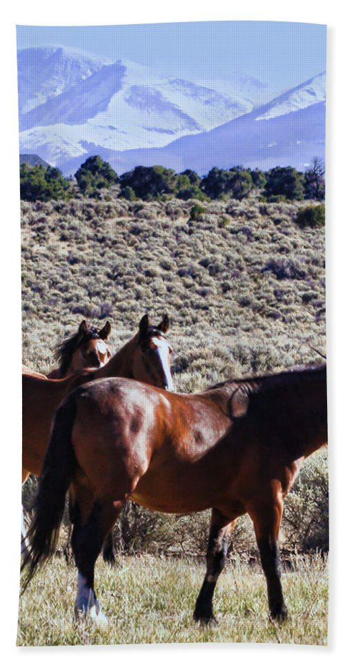 Horse Hand Towel featuring the photograph Wild Bunch by Terry Fiala