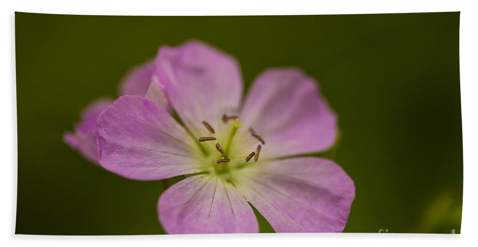 Beautiful Bath Sheet featuring the photograph Wild Geranium by Jack R Perry