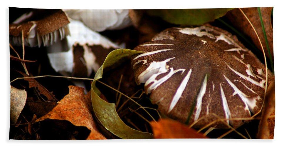 Usa Bath Sheet featuring the photograph Wild Mushroom by LeeAnn McLaneGoetz McLaneGoetzStudioLLCcom