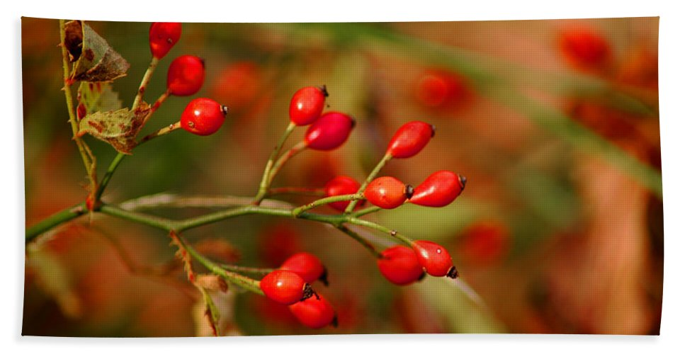 Floral Bath Sheet featuring the photograph Wild Red Berry Reflections by LeeAnn McLaneGoetz McLaneGoetzStudioLLCcom