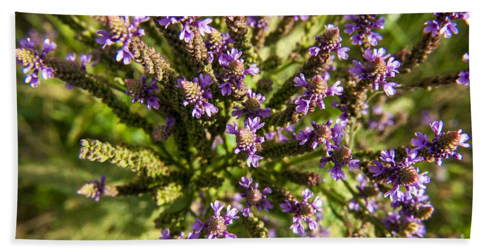 Wildflower Bath Sheet featuring the photograph Wildflowers Top Down by Darleen Stry