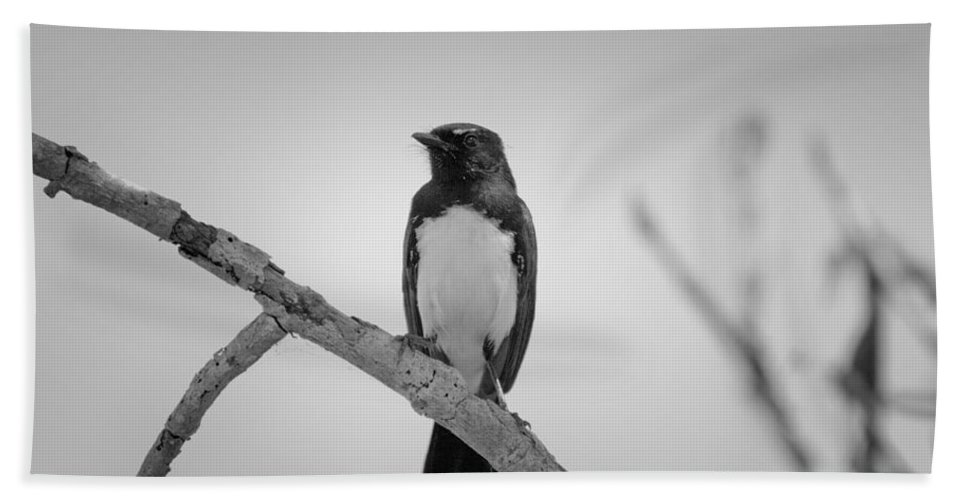 Willie Wagtail Hand Towel featuring the photograph Willie Wagtail V2 by Douglas Barnard