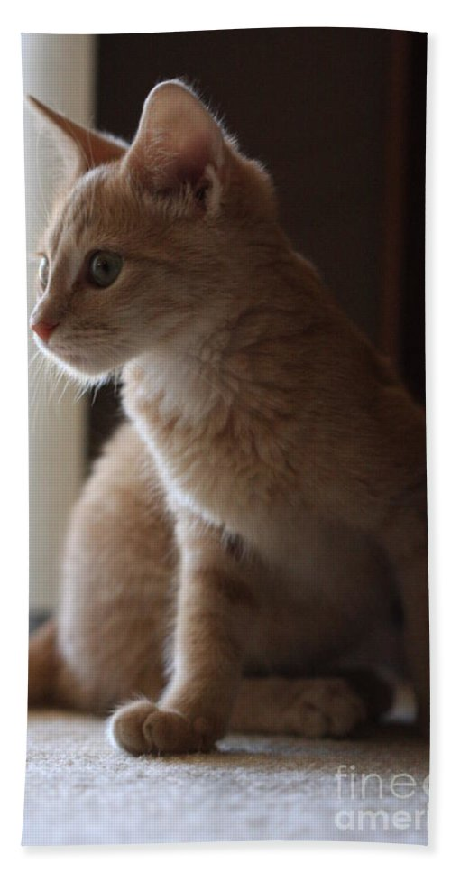 Kittens Hand Towel featuring the photograph Window Light by Kim Henderson