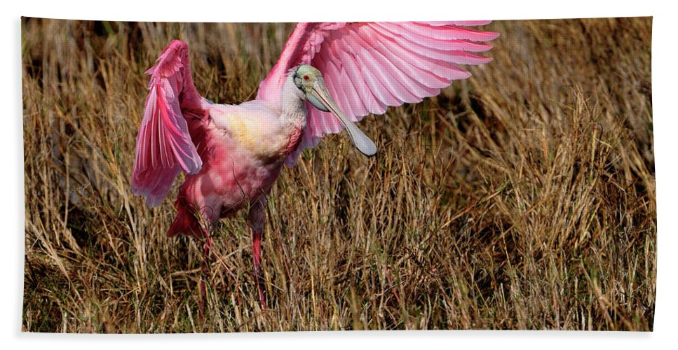 Roseate Spoonbill Bath Sheet featuring the photograph Wings Of Pink And Silk by Bill Dodsworth