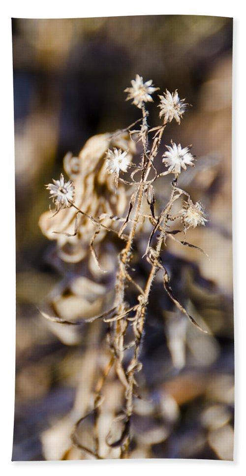Usa Bath Sheet featuring the photograph Winter Blossom Fairy by LeeAnn McLaneGoetz McLaneGoetzStudioLLCcom