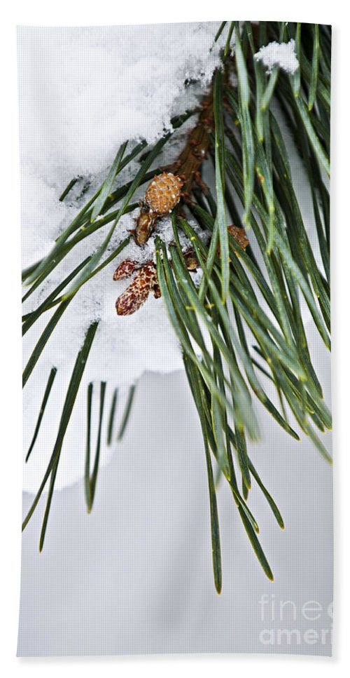 Winter Hand Towel featuring the photograph Winter Branches by Elena Elisseeva