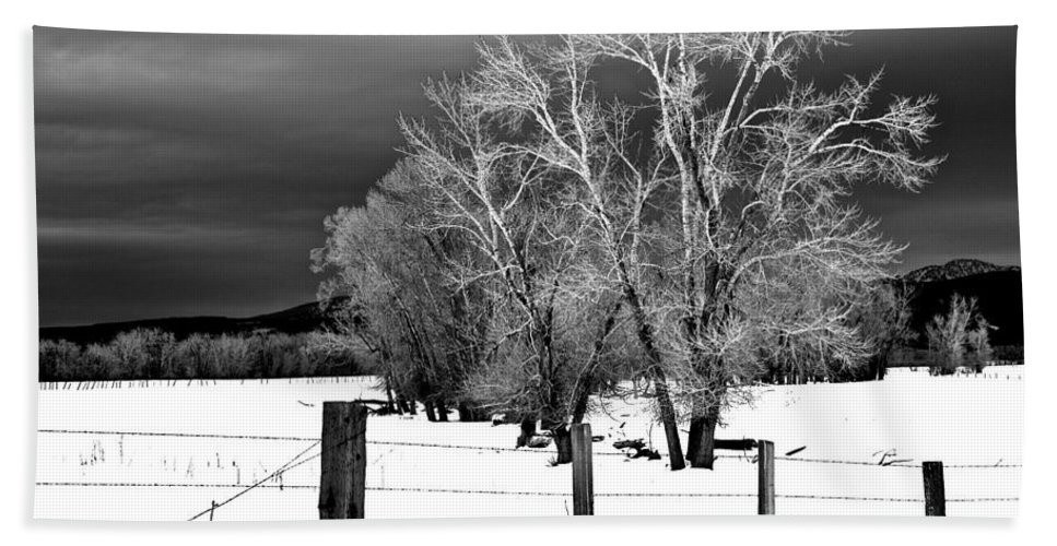 Cottonwood Trees Bath Sheet featuring the photograph Winter Cottonwoods by Eric Tressler