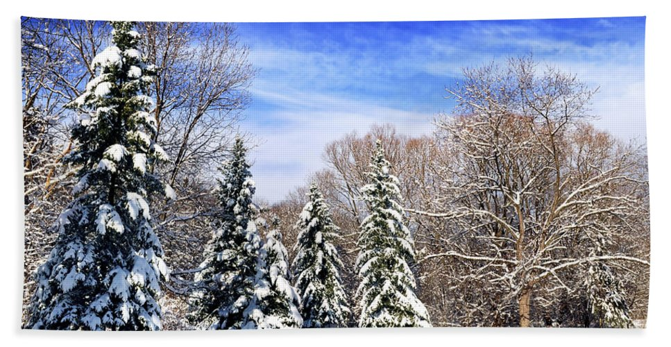 Winter Hand Towel featuring the photograph Winter Forest With Snow by Elena Elisseeva