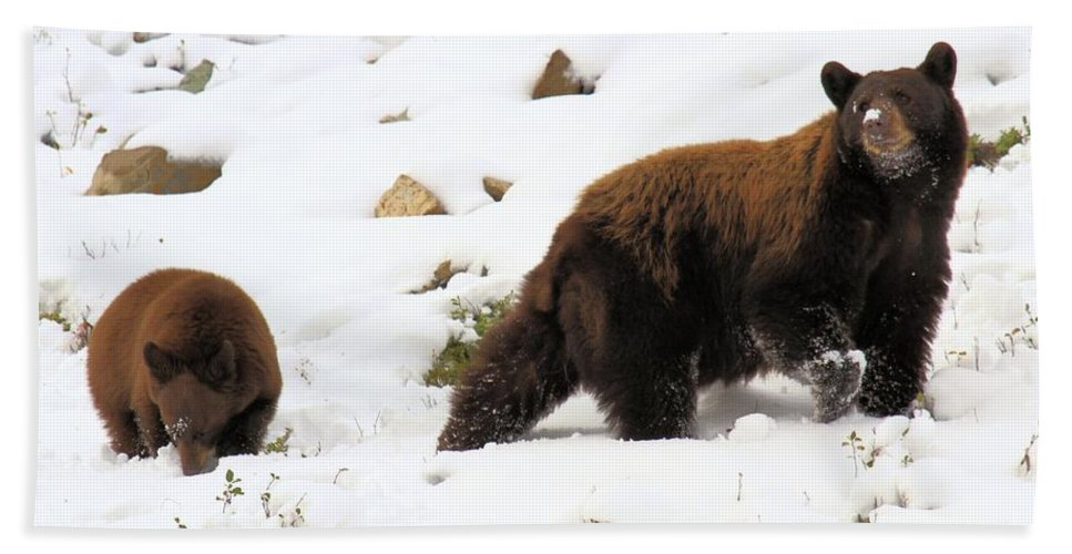 Black Bears Hand Towel featuring the photograph Winter Guide by Adam Jewell