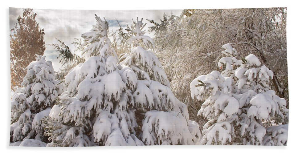 Winter Bath Sheet featuring the photograph Winter Wonderland by James BO Insogna