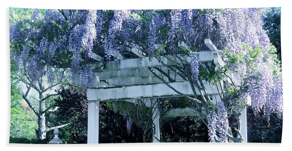 Wisteria In Bloom Hand Towel featuring the photograph Wisteria In Bloom by Nancy Patterson