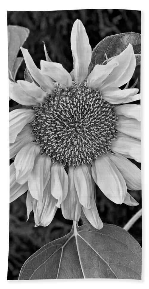 Flowers Bath Sheet featuring the photograph Wistful One Monochrome by Steve Harrington
