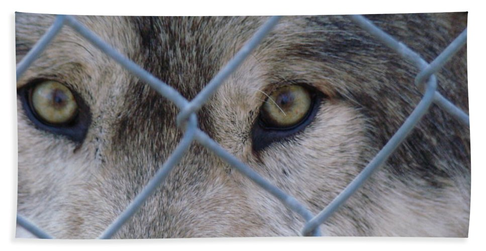 Freedom Hand Towel featuring the photograph Wolf Eyes by Art Dingo