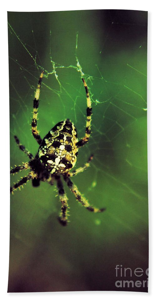 Spiders Bath Sheet featuring the photograph Wolf Spider by Jeff Swan