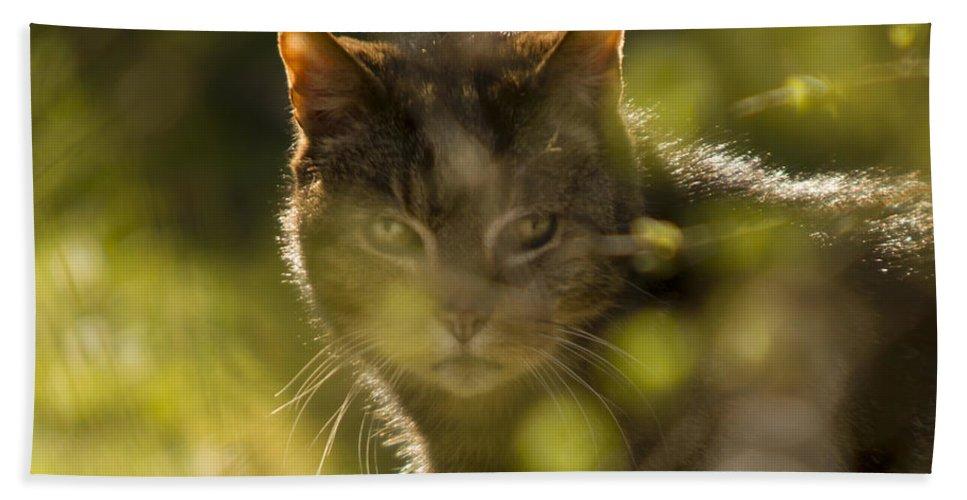 Cat Bath Sheet featuring the photograph Wonky Eyed Tiger by Angel Ciesniarska