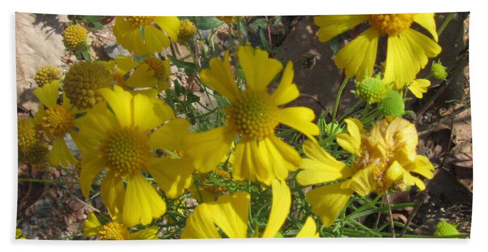 Plant Bath Sheet featuring the photograph Woolley Ragwort by Donna Brown