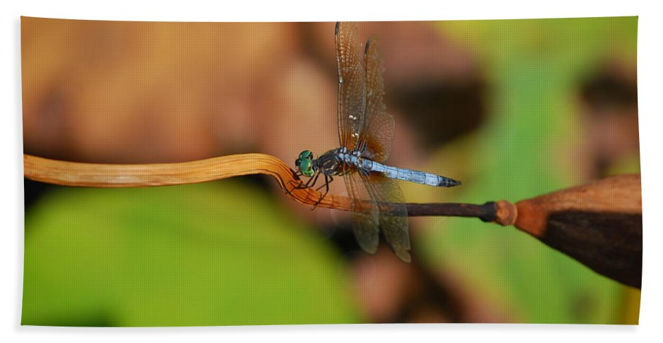Dragonfly Bath Sheet featuring the photograph Wounded Wing by Lori Tambakis