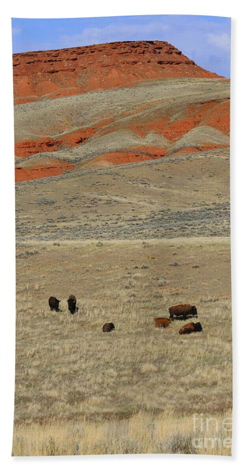 Wyoming Hand Towel featuring the photograph Wyoming Red Cliffs And Buffalo by Carol Groenen