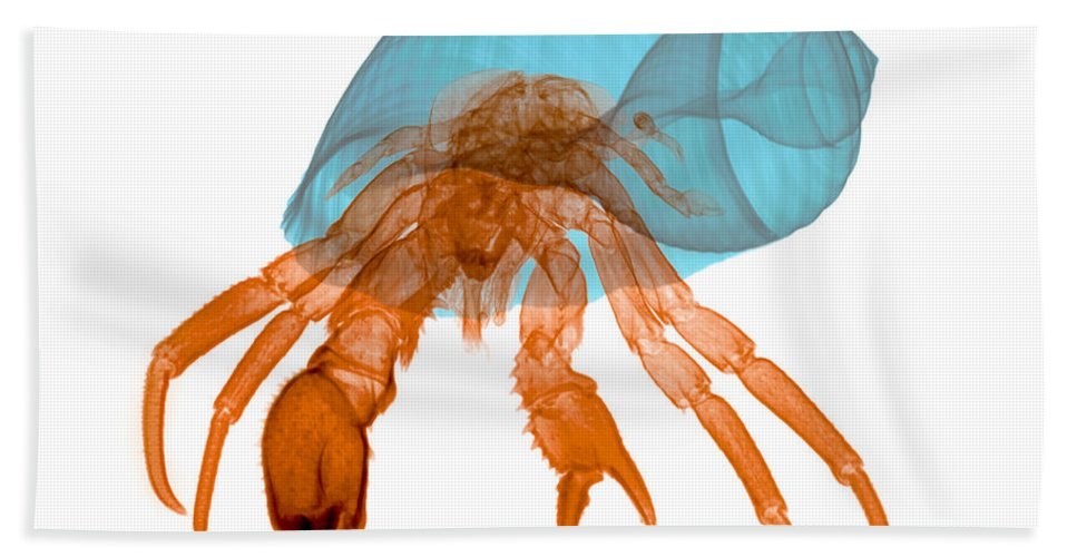 Xray Hand Towel featuring the photograph X-ray Of Hermit Crab by Ted Kinsman