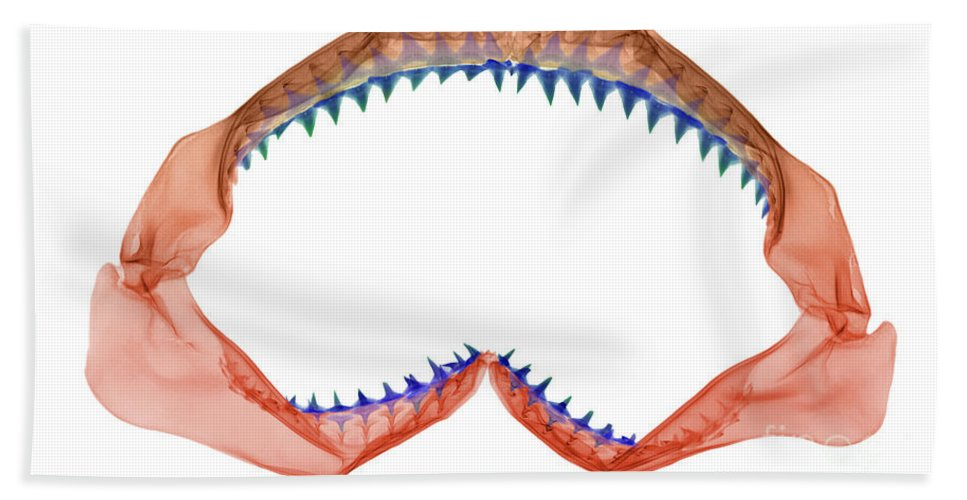 Animal Hand Towel featuring the photograph X-ray Of Shark Jaws by Ted Kinsman