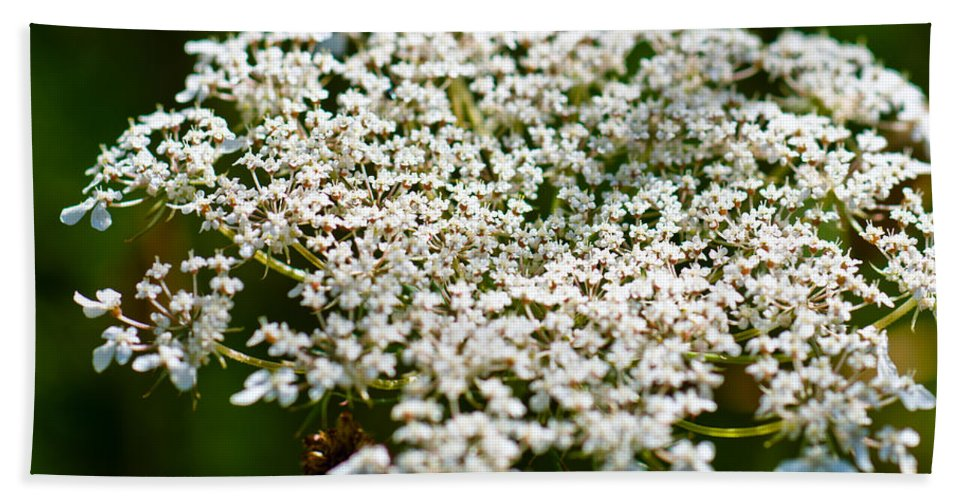 Abstract Bath Sheet featuring the photograph Yarrow Plant Flower Head by U Schade
