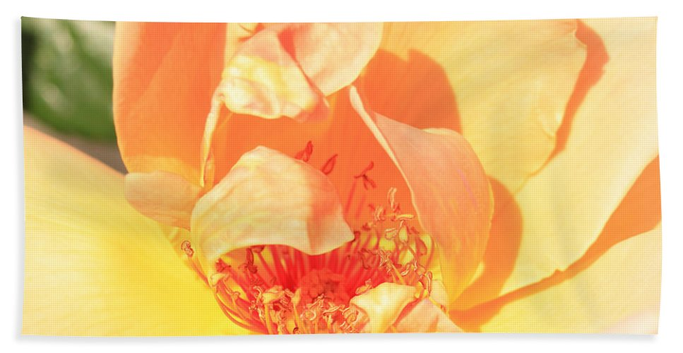 Floral Hand Towel featuring the photograph Yellow And Peach Rose by Donna Corless