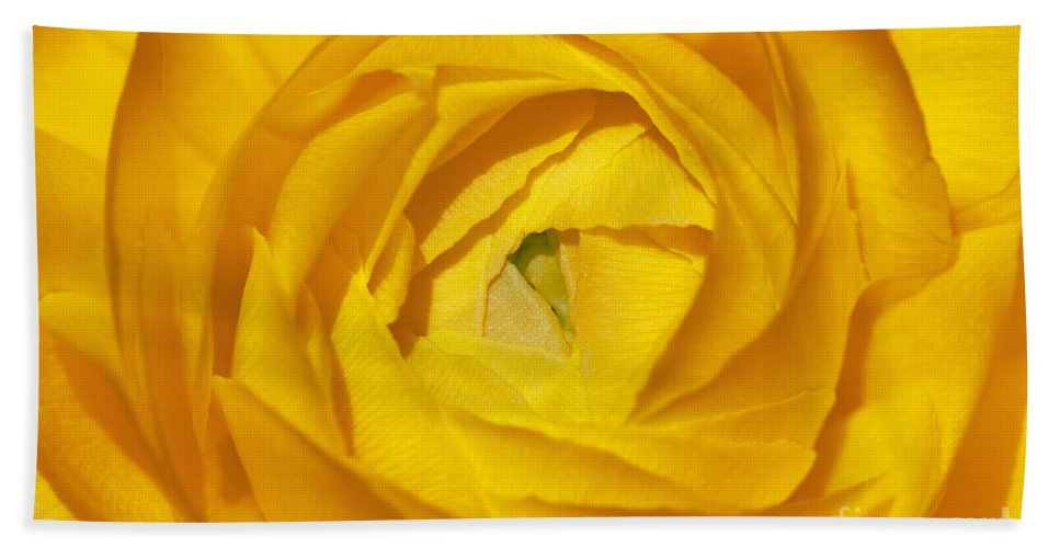 Bronstein Hand Towel featuring the photograph Yellow Beauty by Sandra Bronstein