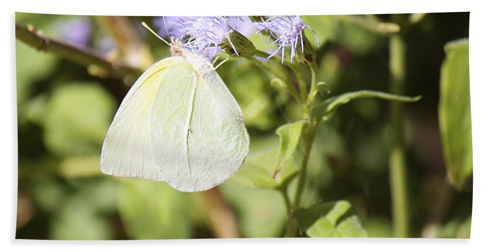Roena King Bath Sheet featuring the photograph Yellow Butterfly Feeding On Violet Flower by Roena King