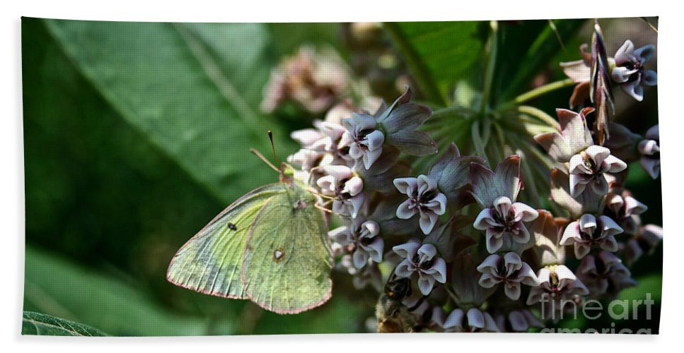 Outdoors Bath Sheet featuring the photograph Yellow Cabbage Moth by Susan Herber