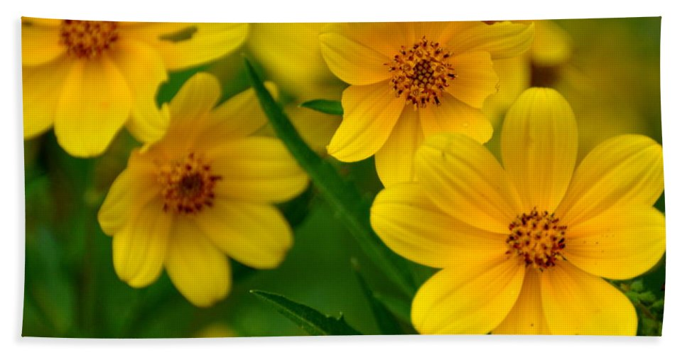 Wildflower Hand Towel featuring the photograph Yellow Flowers by Marty Koch