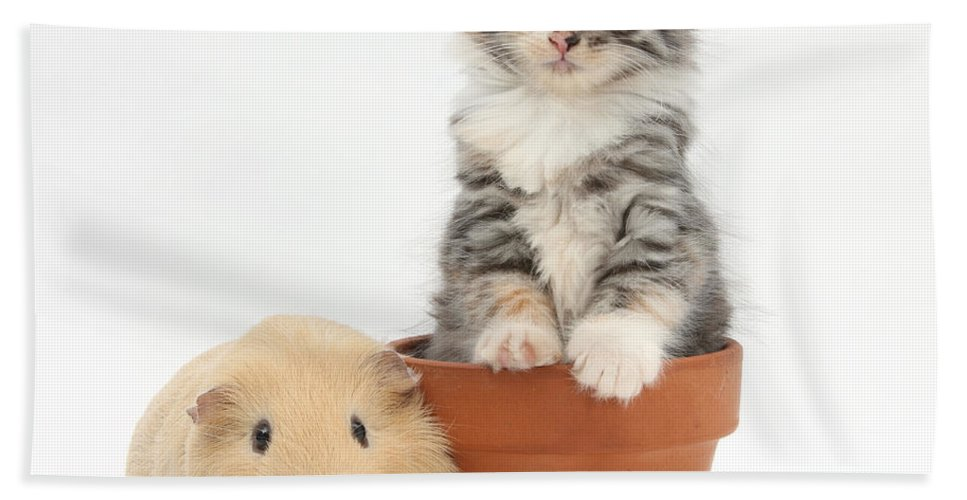 Nature Hand Towel featuring the photograph Yellow Guinea Pig And Kitten by Mark Taylor