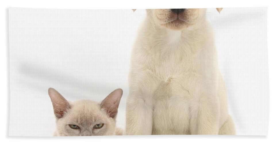 Animal Hand Towel featuring the photograph Yellow Lab And Burmese Cat by Mark Taylor