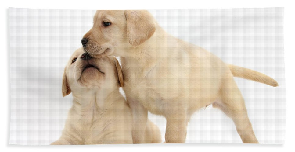 Animal Hand Towel featuring the photograph Yellow Lab Puppies by Mark Taylor