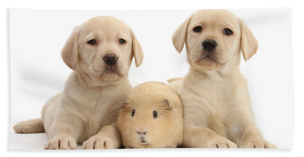 Nature Hand Towel featuring the photograph Yellow Labrador Retriever Pups by Mark Taylor