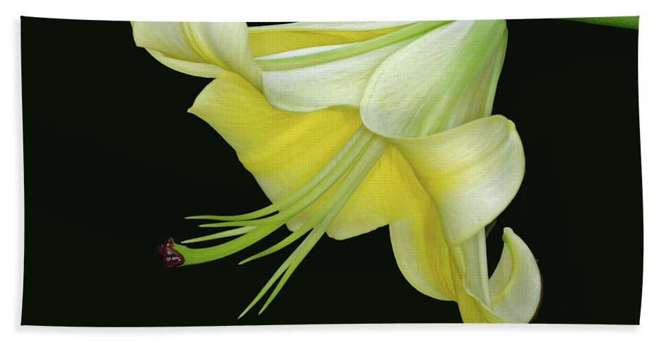 Lily Bath Sheet featuring the photograph Yellow Lily by Dave Mills