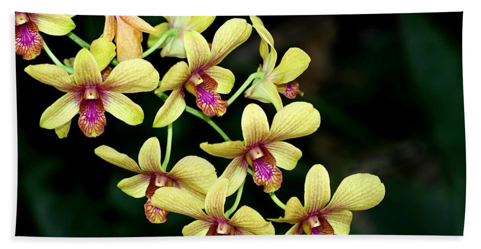 Landscape Hand Towel featuring the photograph Yellow Orchid Cascade by Sabrina L Ryan