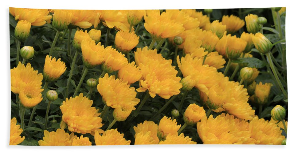 Yellow Sea Of Flowers Bath Sheet featuring the photograph Yellow Sea Of Flowers by Douglas Barnard