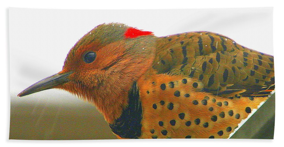Yellow-shafted Flicker Bath Sheet featuring the photograph Yellow Shafted Flicker by Laurel Talabere