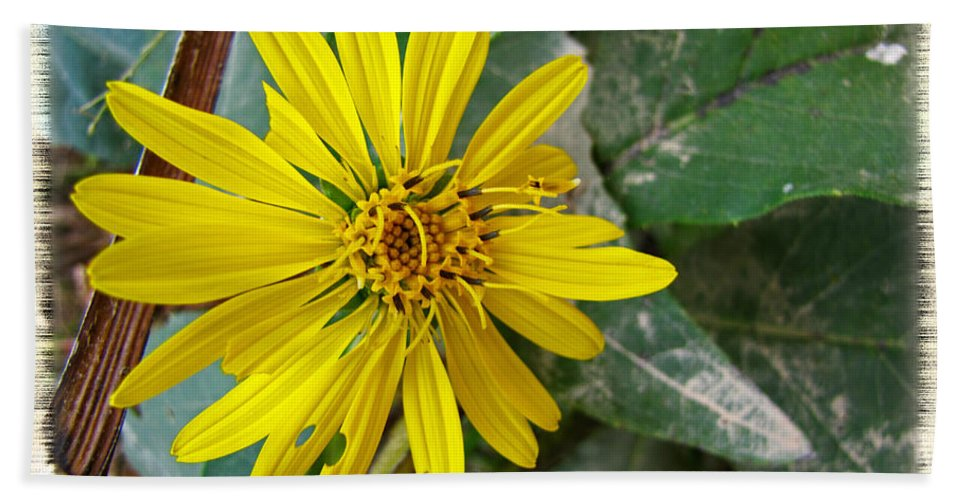 Nature Hand Towel featuring the photograph Yellow Wildflower by Debbie Portwood