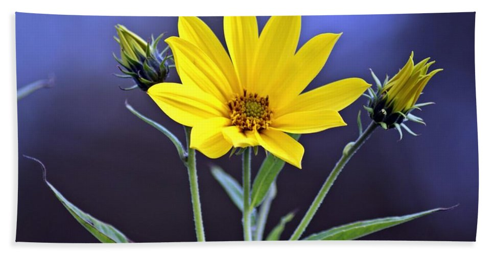 Yellow Bath Sheet featuring the photograph Yellow Wildflower by Joe Faherty